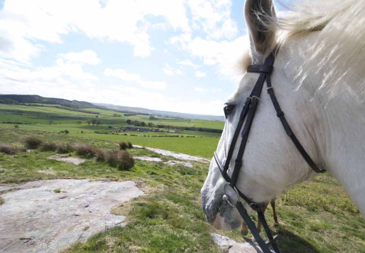 Enjoy Moor rides