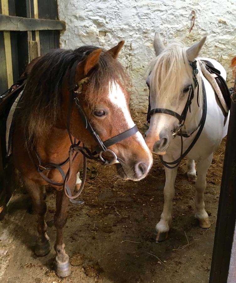 Ponies at Kimmerston Riding Centre