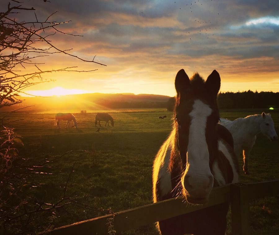 Kimmerston Riding Centre at Sunset